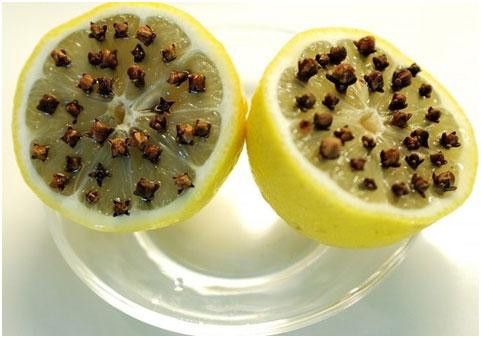 gvozdika-ot-komarov
