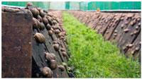 vyrashhivanie-ulitok-na-plantacijah