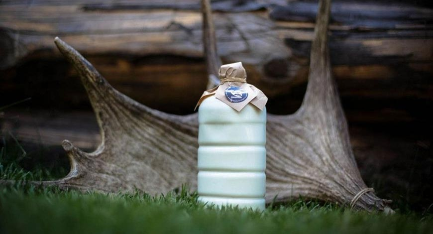 4 аргумента за и против употребления лосиного молока