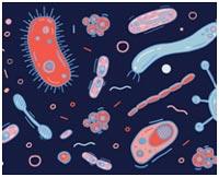 obrazovanie-prebiotikov