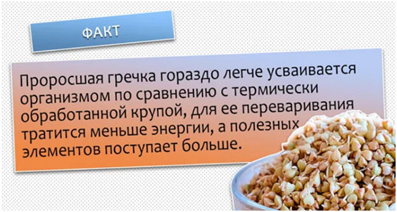 info-o-proroshhennoj-grechke