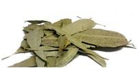 izmelchenie-listev-jevkalipta