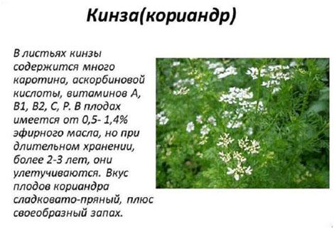 svojstva-koriandrovogo-meda