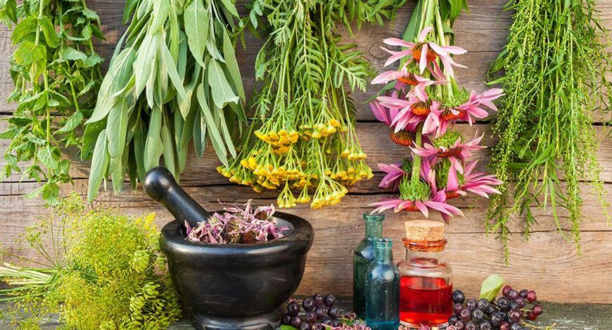 3 лучшие пищевые добавки из полезных трав Алтая