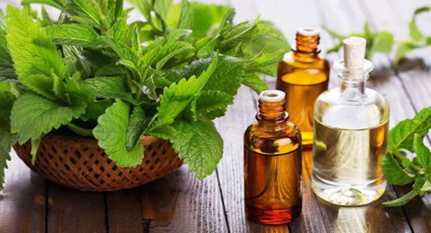 22 способа использования эфирного масла перечной мяты