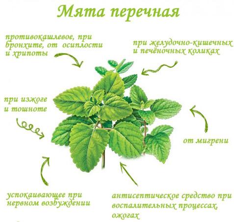 miata-perechnaia