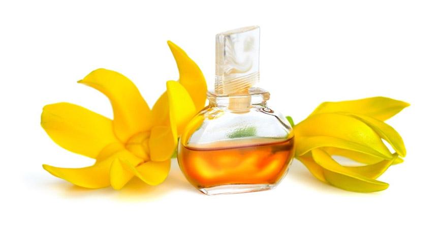 8 главных составляющих эфирного масла иланг иланг