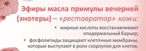 jefiry-masla-primuly-vechernej