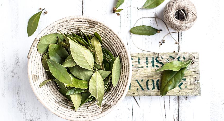Лавровый лист - источник красоты и здоровья