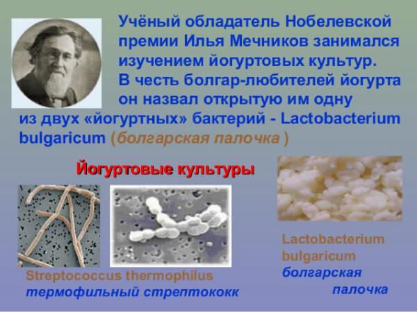 Открытие болгарской палочки