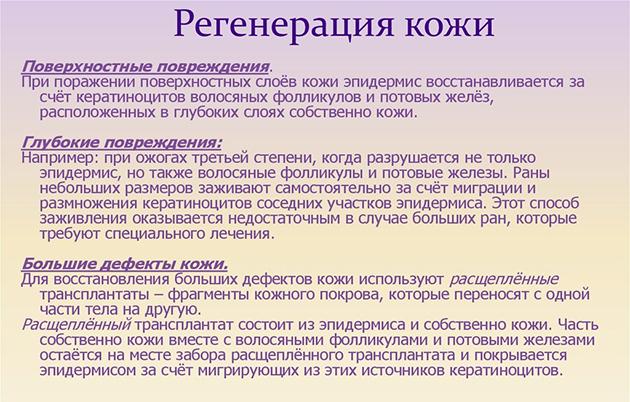 Регенерация кожи